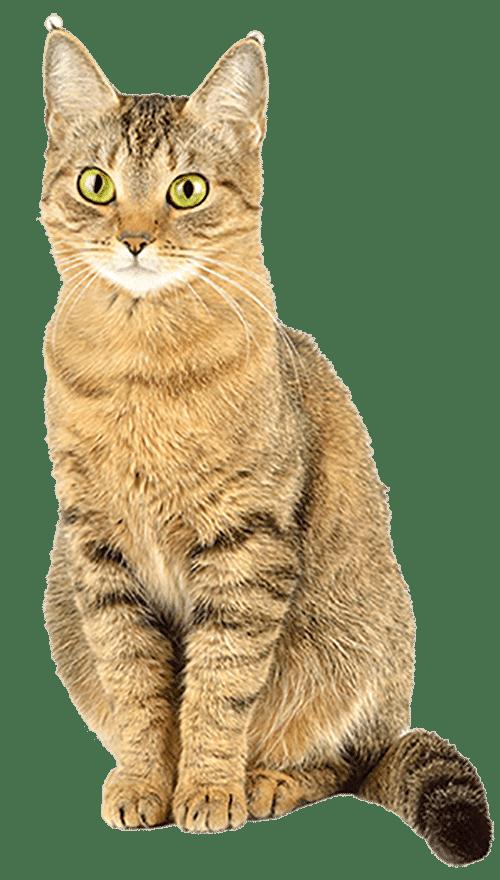 cat-500